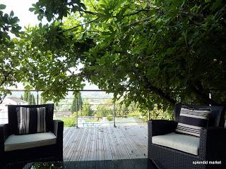 Respite in a fig grove