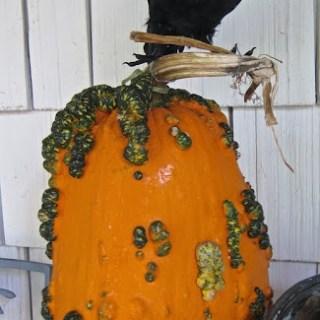 Halloween happenings…