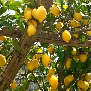 Sentiero dei limoni, Costa d'amalfi, Italy…