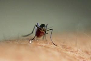 タイ 飛行機 虫除けスプレー,タイ 蚊に刺される,タイ 蚊に刺された