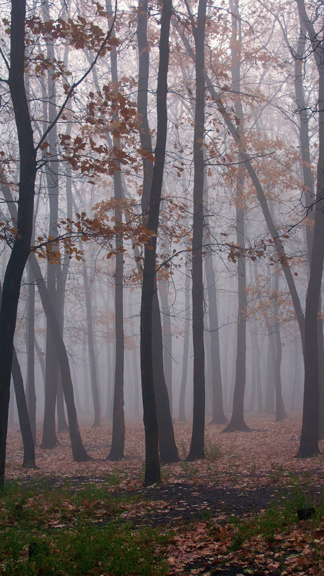 Foggy Forest 1080 X 1920 HD Phone Wallpaper