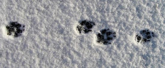 Minnie's paw tracks