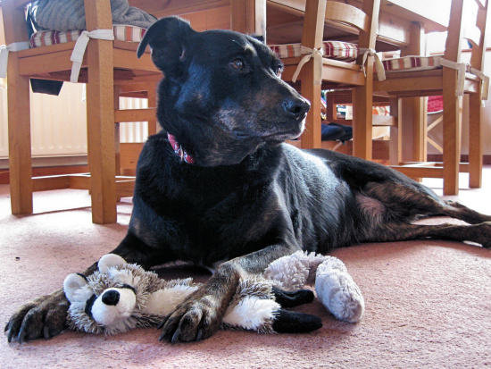 Minnie subdues racoon