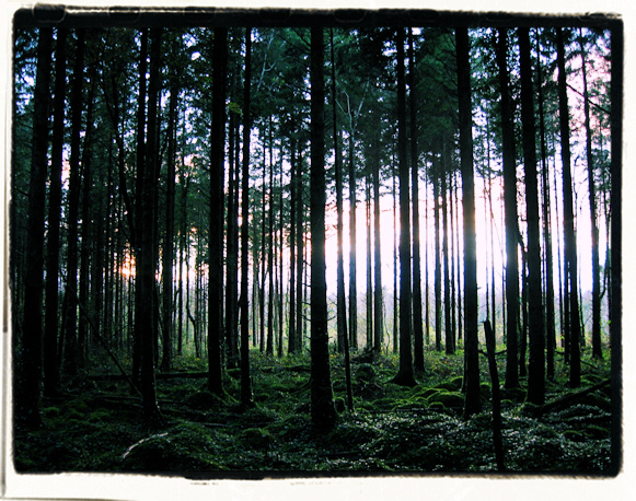 November Woods, filtered