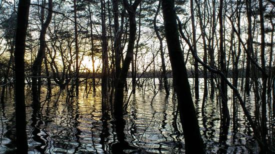 bayou Coole