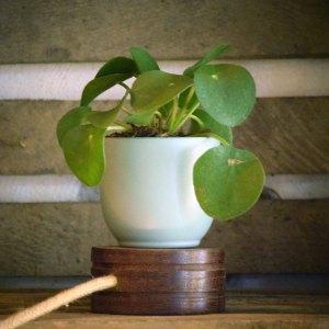 Plant base Ledo Lux