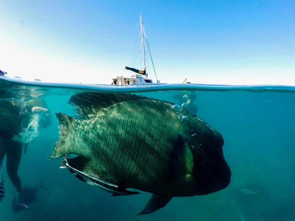 Split photo of a very big fish swimming in the sea.