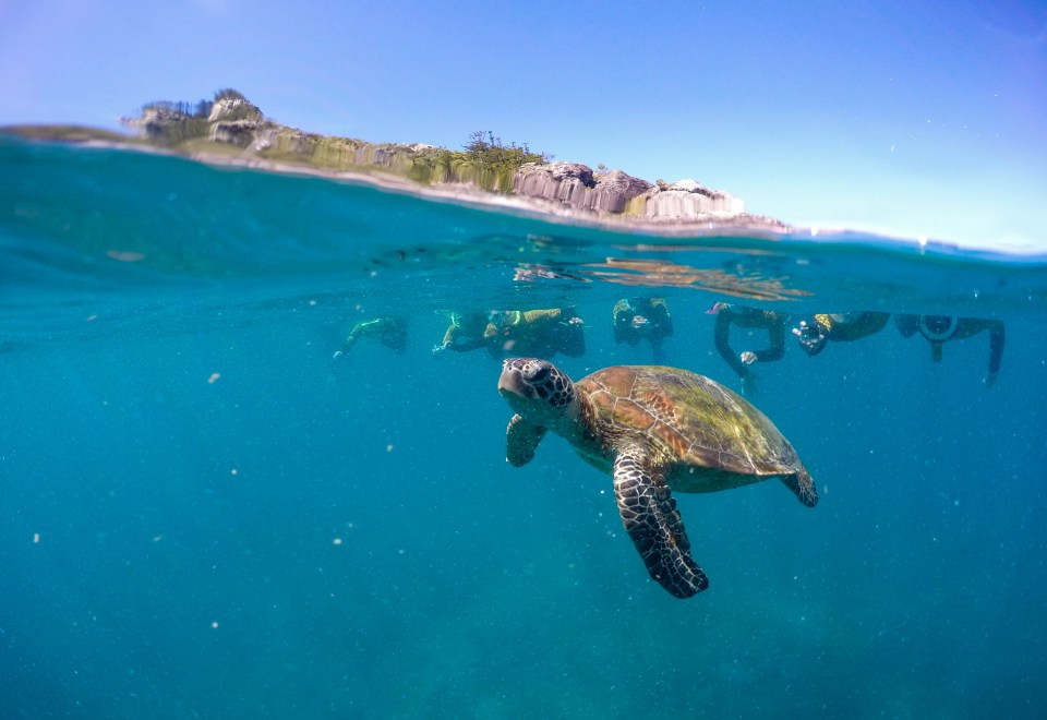 An over under photography of a small sea turtle with divers in the back.