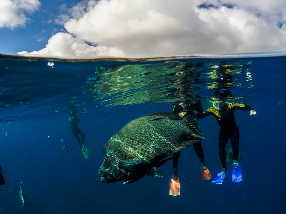 GoPro dome photo of a giant fish with two divers in the back