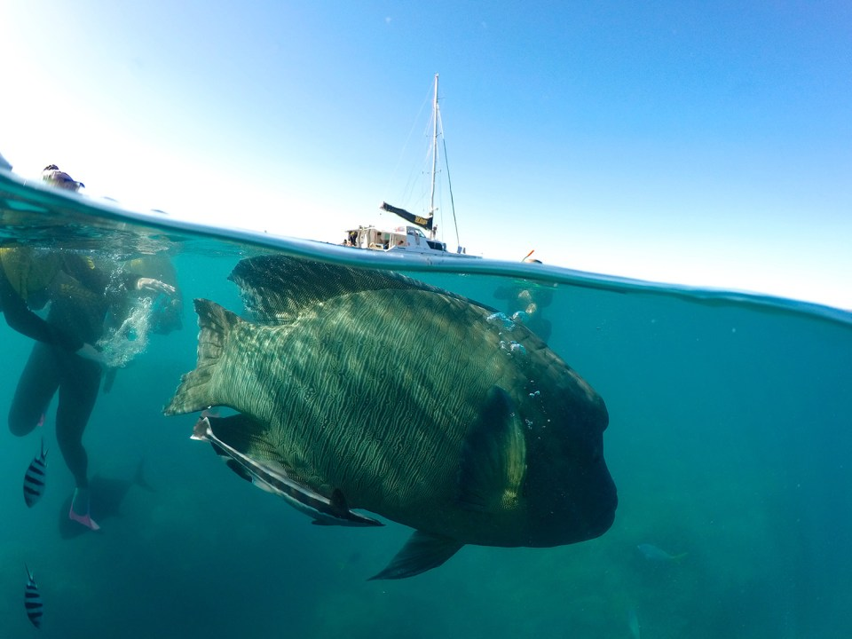 GoPro dome photo of a giant fish