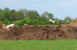 """Spring"" lambs!"