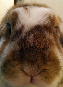 Ginger coming in for her close up