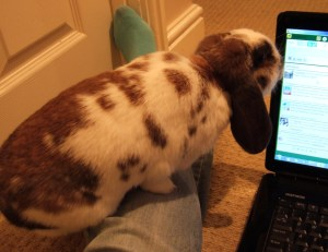 Chocolate checking out twitter