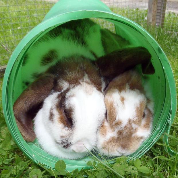 Capture the Colour - Green - Sleeping Bunnies