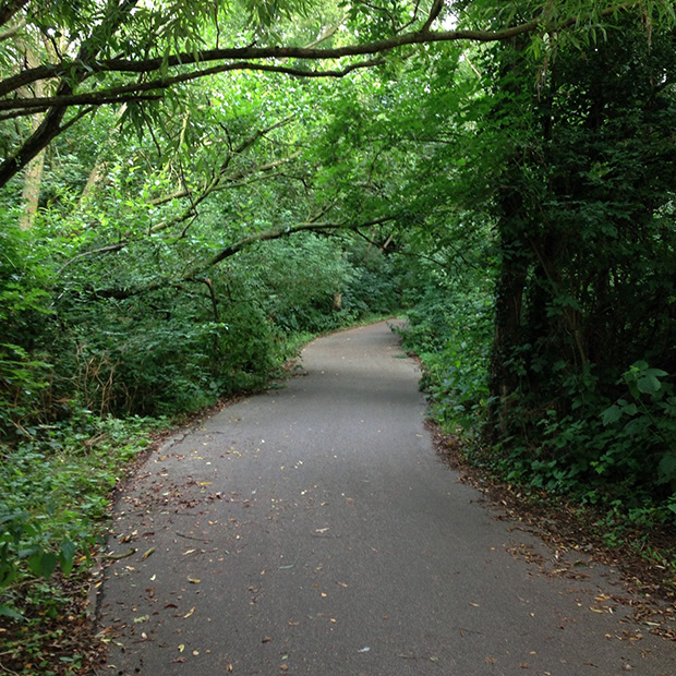 My Cycle Ride to Work - Woodland Path