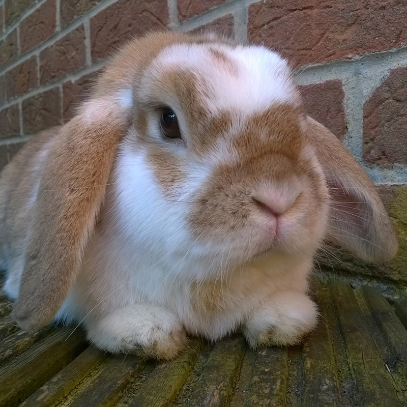 Ginger Bunny taken on the Lumia 1320
