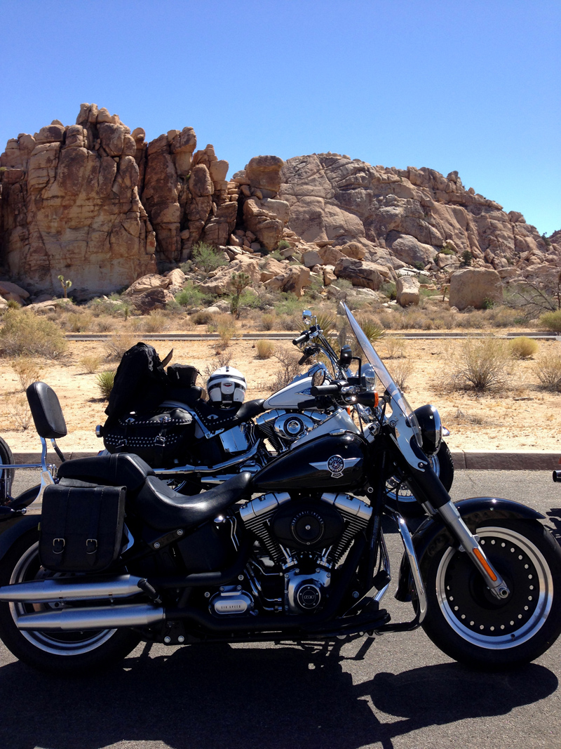 Our bikes in Joshua Tree National Park