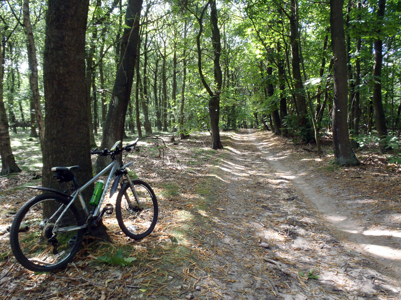 Sherwood Pines Forest Mark - Mountain Bike Trail