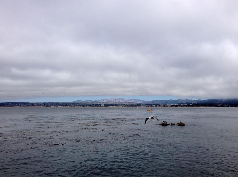 View from Monterey Aquarium