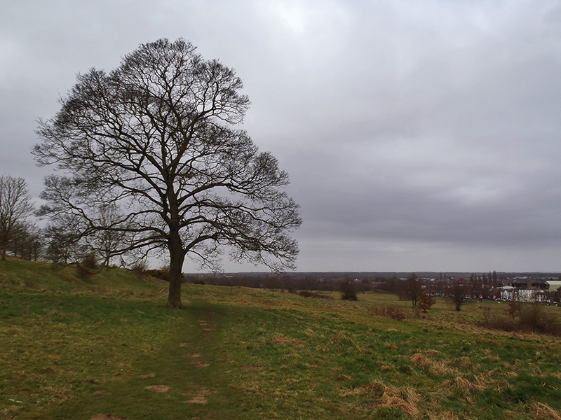 Nature's Spaces in Lincoln - South Common
