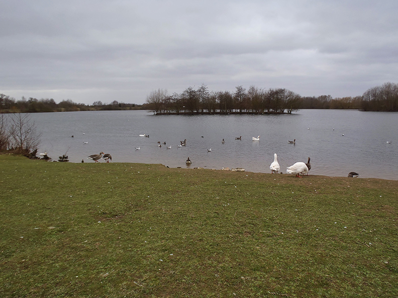 Nature's Spaces in Lincoln - Millennium Green