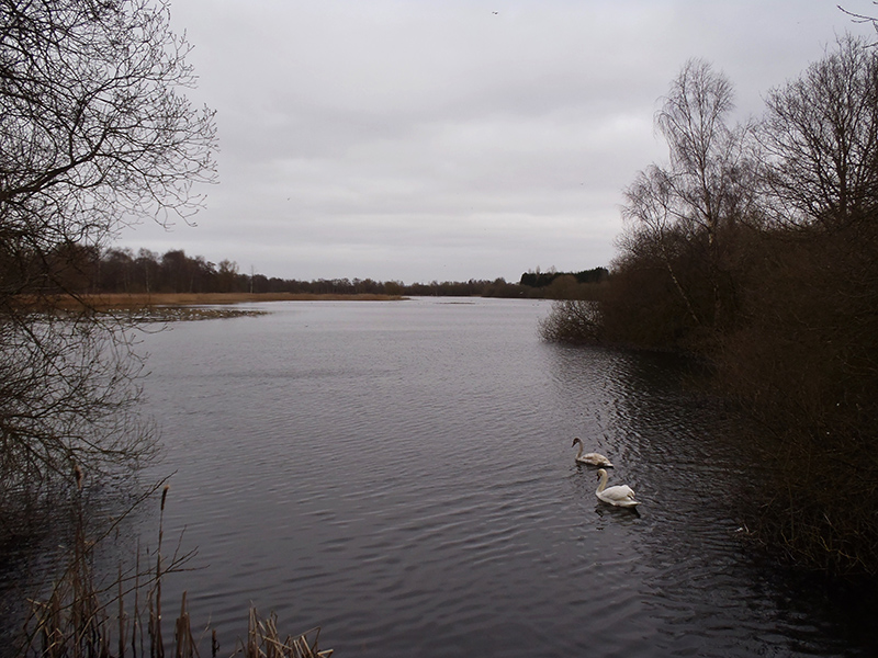 Nature's Spaces in Lincoln - Whisby Nature Park