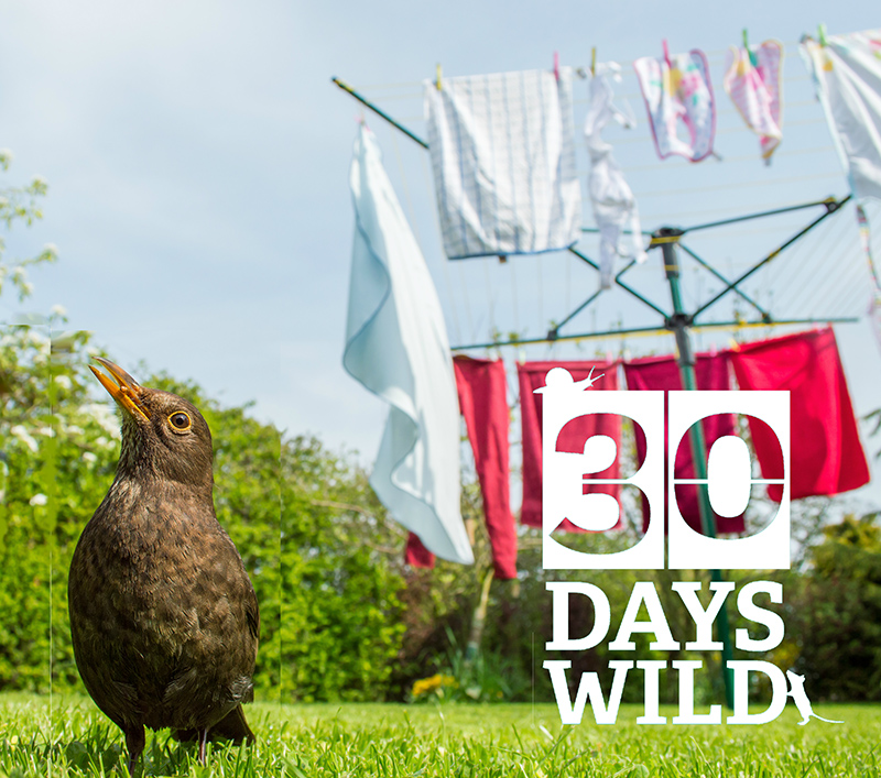 30 Days Wild - The Wildlife Trusts