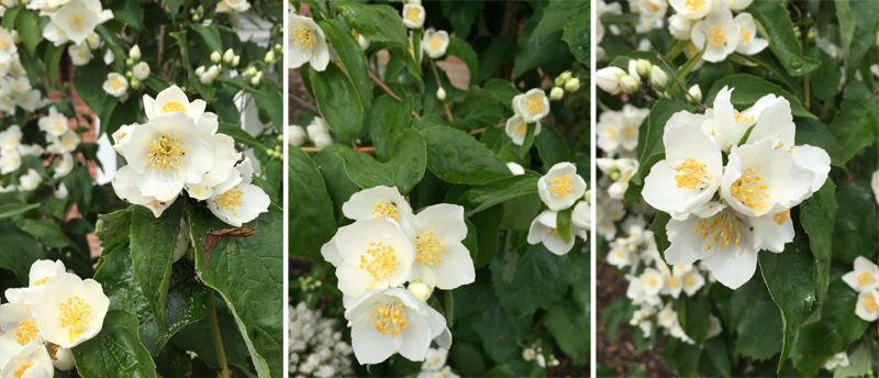 30Days Wild - Flowers in my Garden