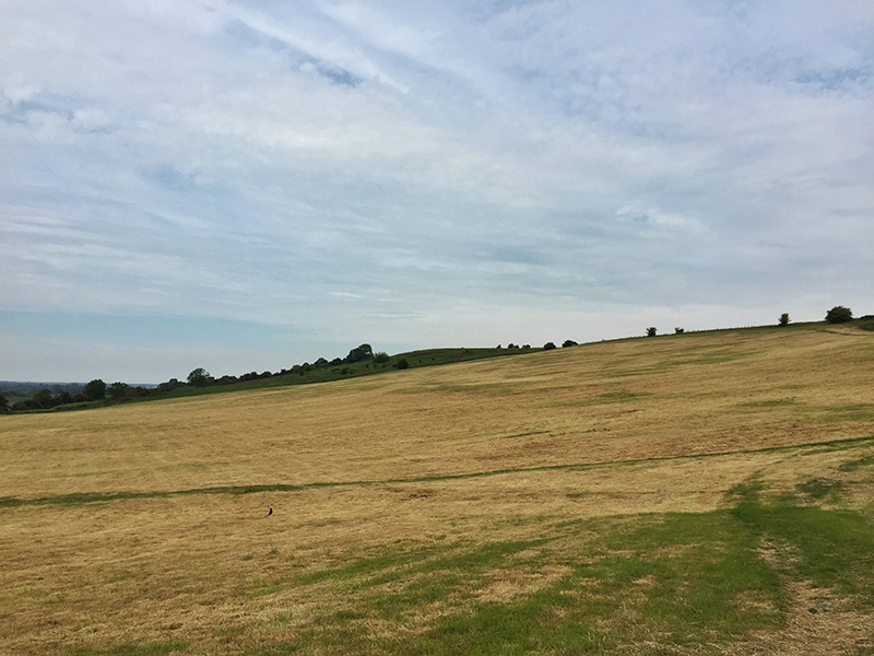 30DaysWild - Open Field
