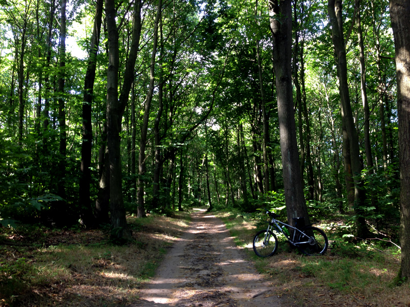 MobileTravelChallenge - Just Me, My Bike and the Forest