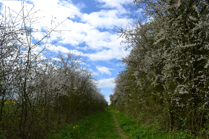 Stephen Langton Trail - Towards Fiskerton
