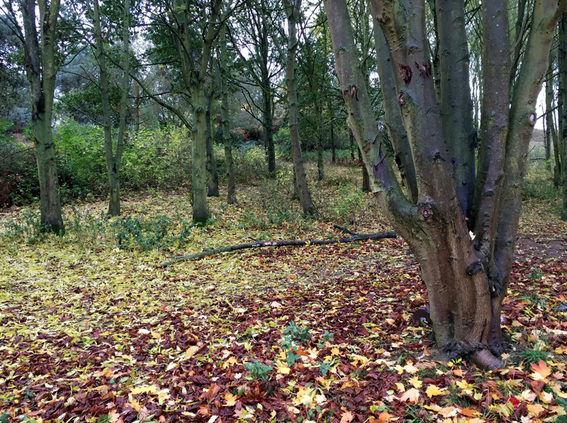Autumn Walk - Woodland | Splodz Blogz