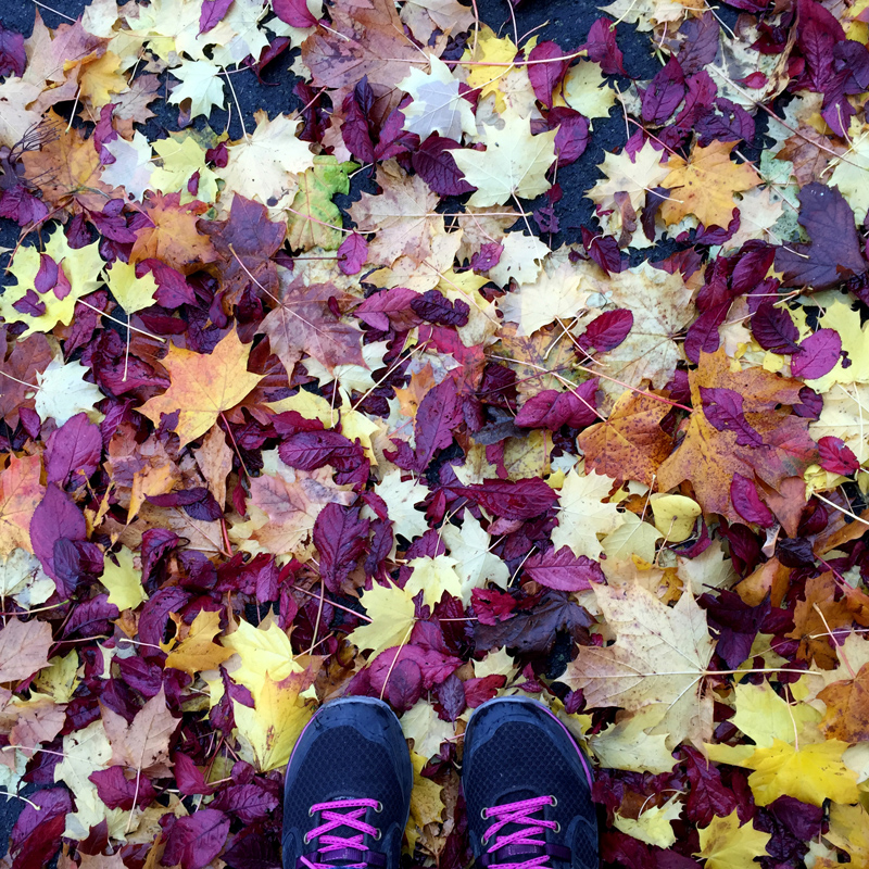 Autumn Leaves | Splodz Blogz