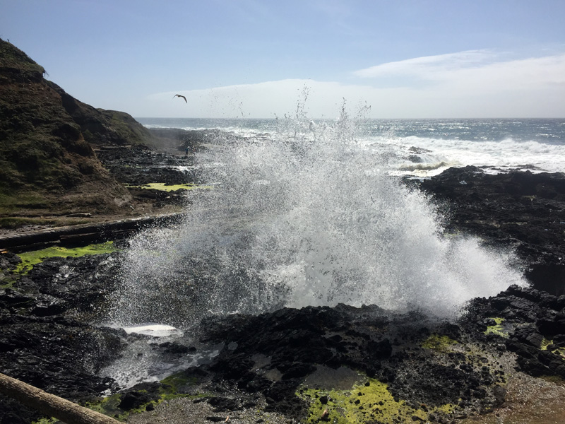 Zartusacan - Tide Pools at Cape Perpetua
