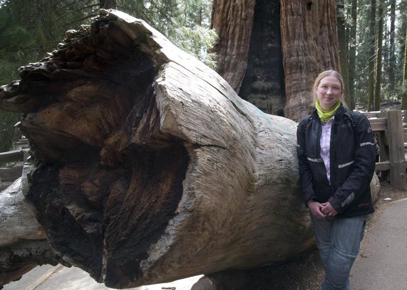 Zartusacan - The General Sherman Tree, Sequoia National Park