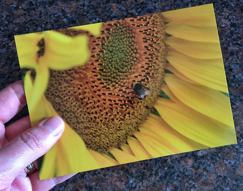 Creating a Postcard using Postsnap - Splodz Blogz
