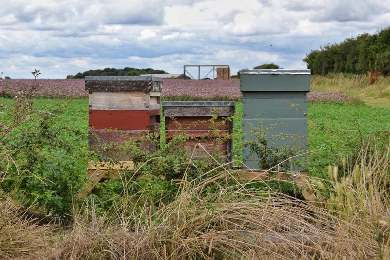 Farm Walk at Vine House Farm, Lincolnshire - Bees