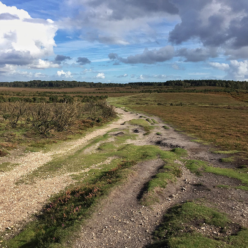 New Forest with OS