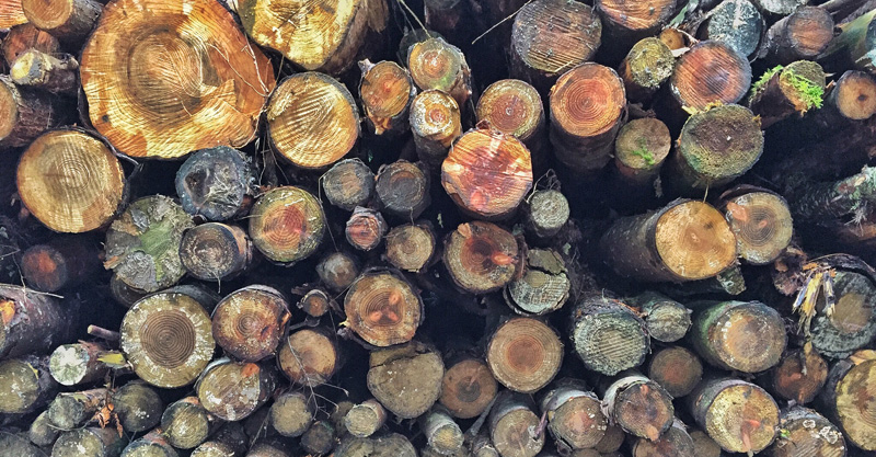 Wood management in Ashen Wood, Splodz Blogz