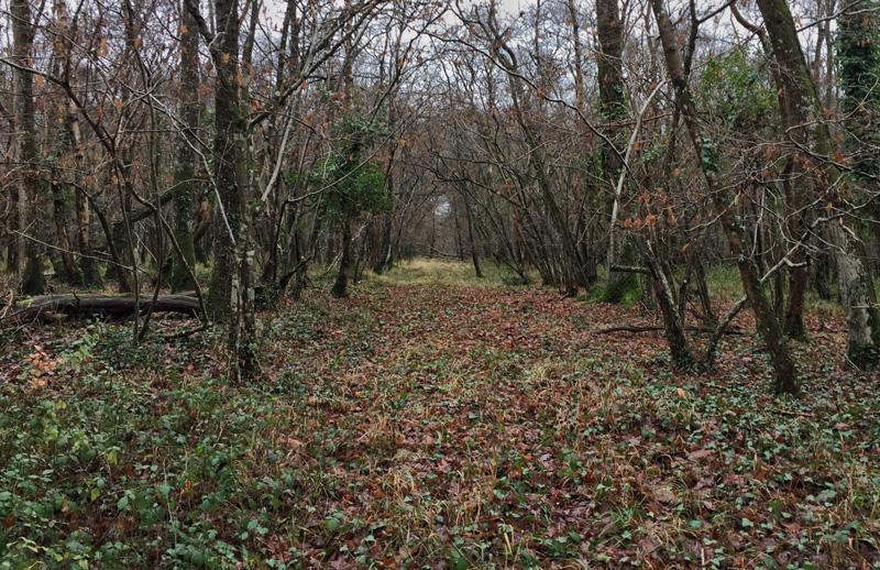 Ashen Wood near Beaulieu, Splodz Blogz