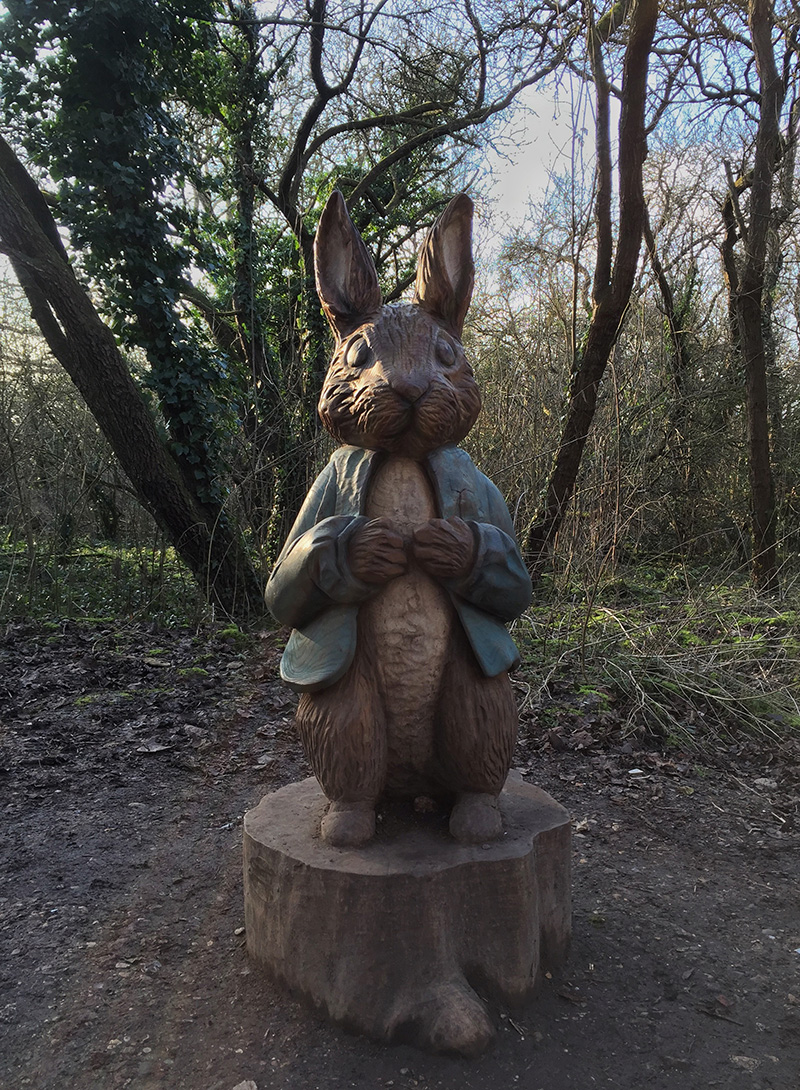 HUNTING FOR PETER RABBIT AT LANGDON NATURE RESERVE