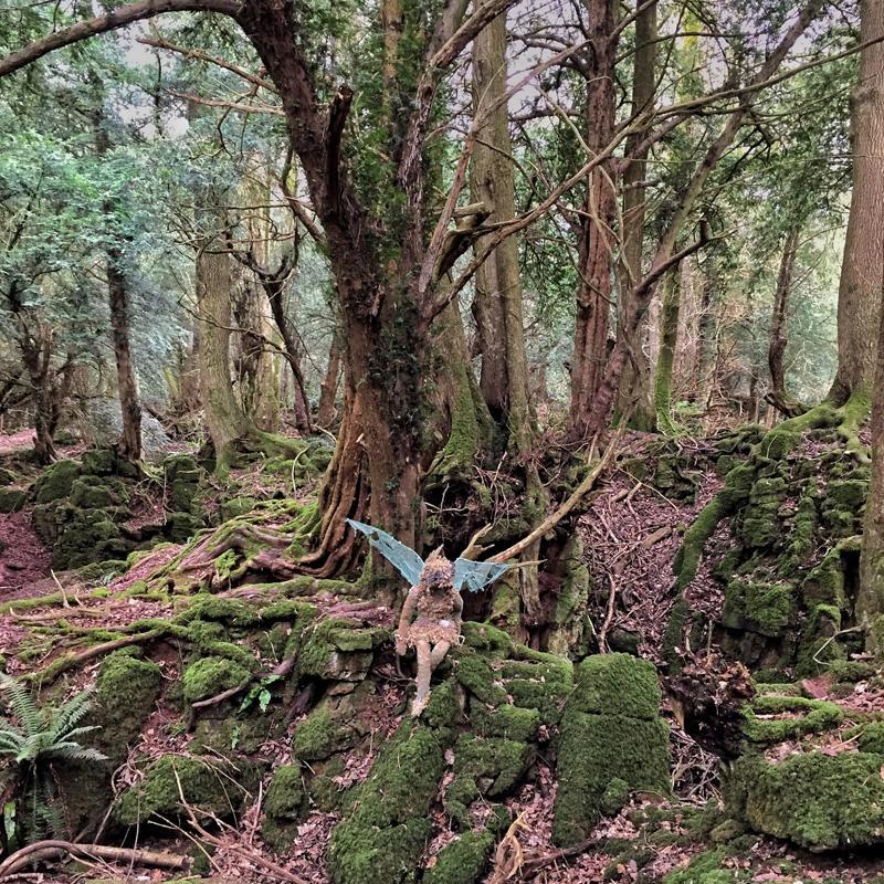 Puzzlewood, Forest of Dean   Splodz Blogz