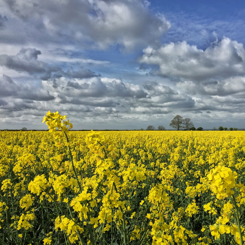 Splodz Blogz | My Nature, Lincolnshire Field