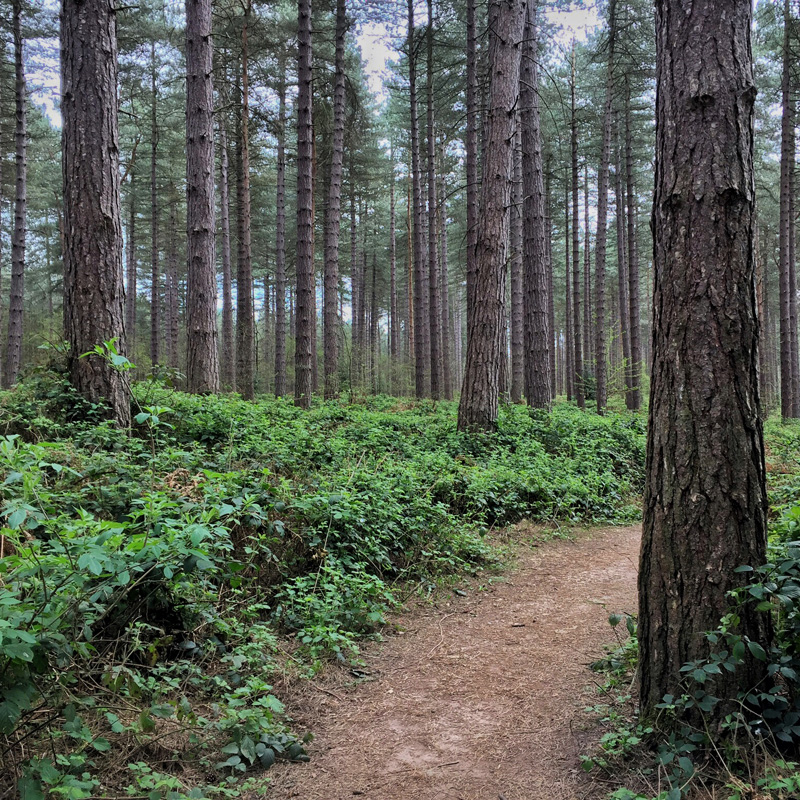 Splodz Blogz | My Nature, Sherwood Pines