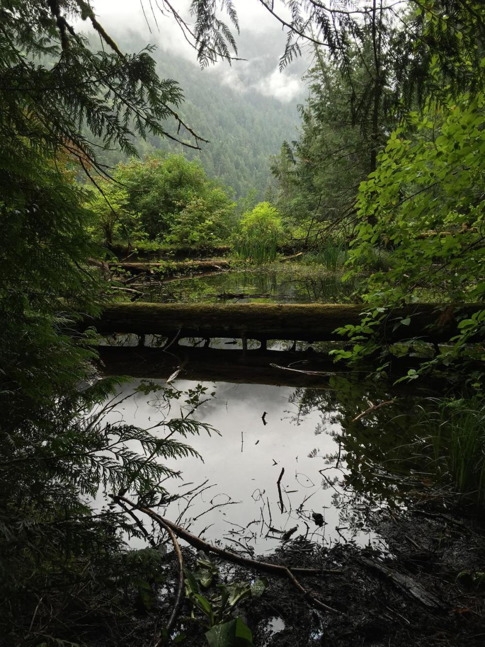Splodz Blogz   Favourite Photos   Canada - Cathedral Grove, MacMillan Provincial Park