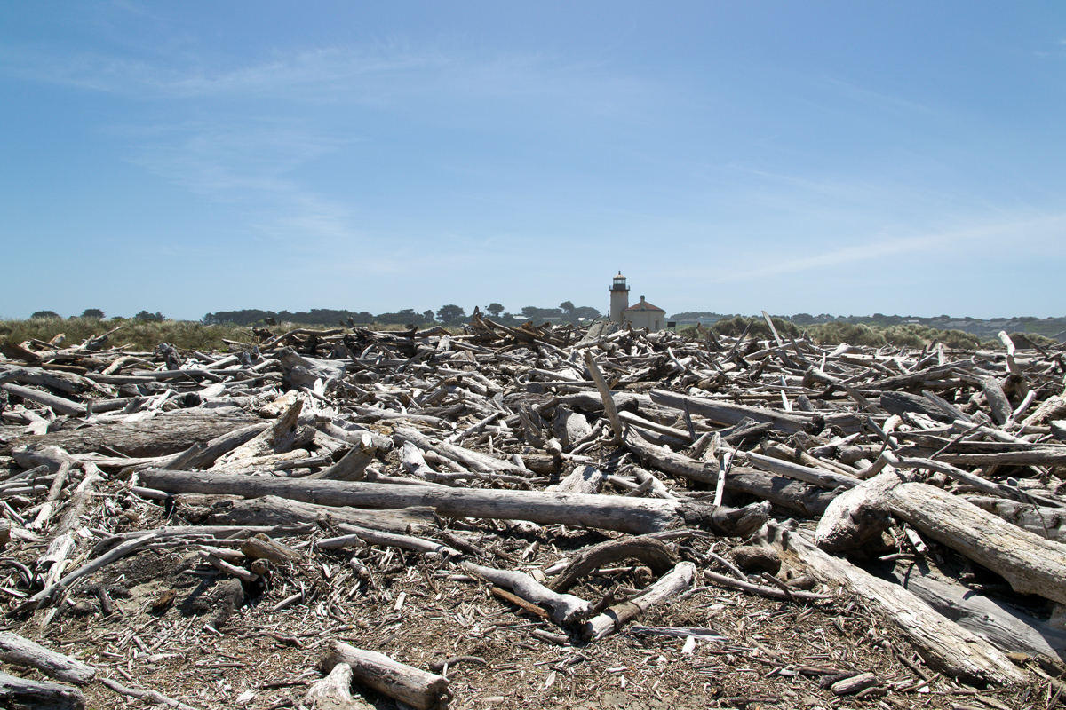 Splodz Blogz | Favourite Photos | Canada - Driftwood and Lighthouse at Bullards Beach State Park