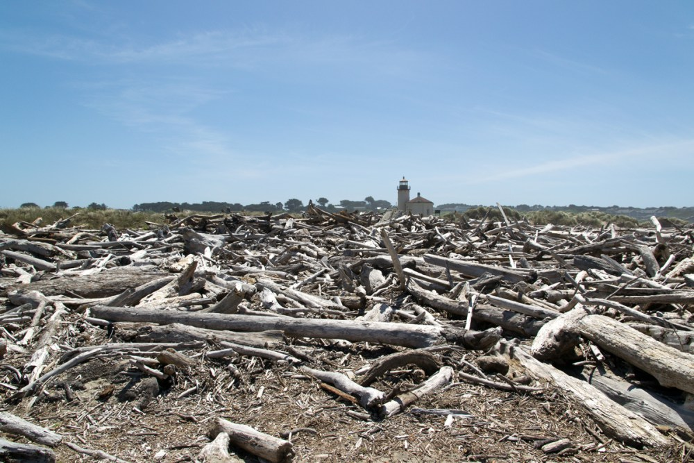 Splodz Blogz | Favourite Photos | USA - Driftwood and Lighthouse at Bullards Beach State Park