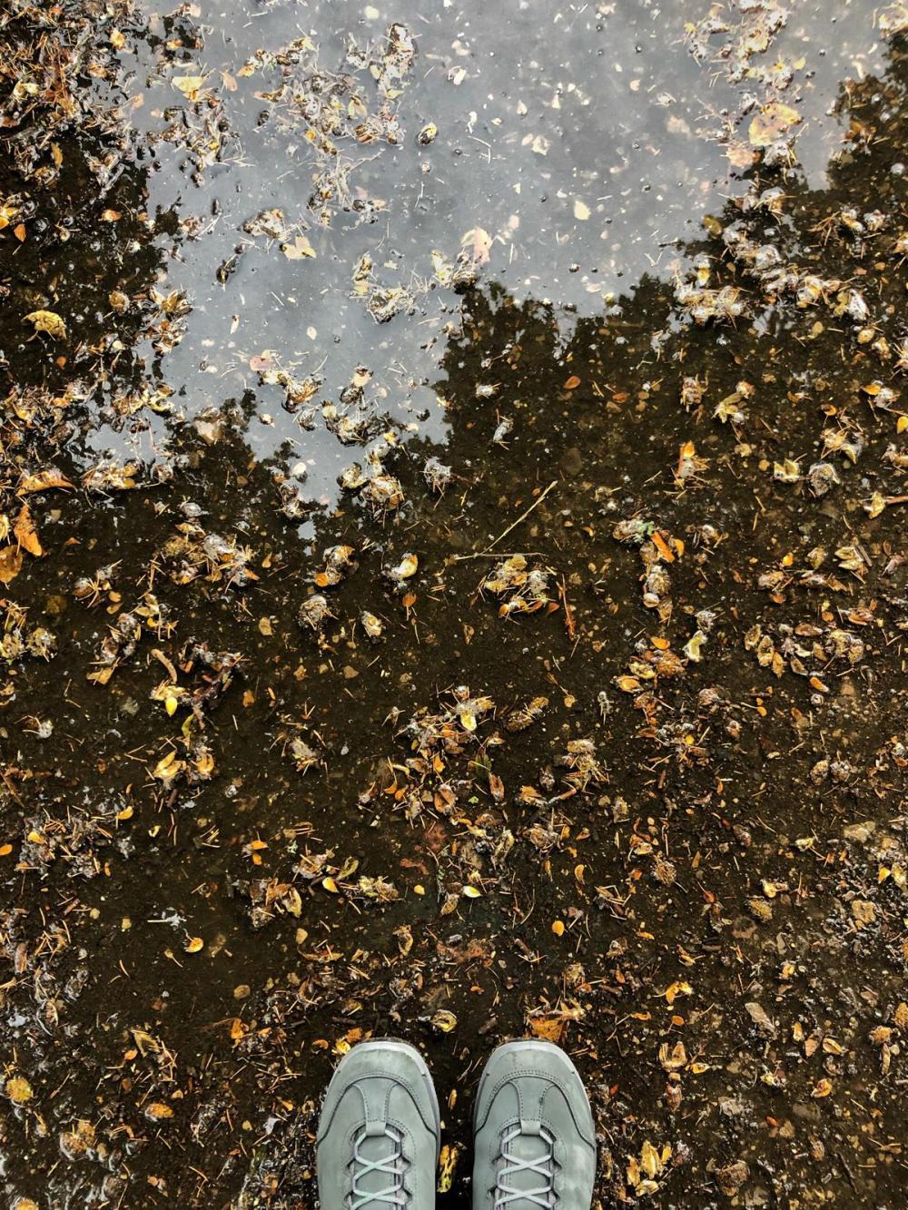 Splodz Blogz   Lowa Locarno Hiking Shoes
