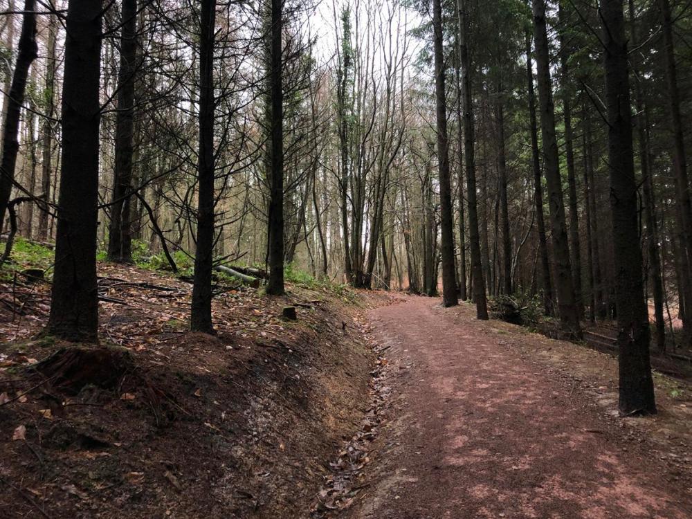 Splodz Blogz   Forest of Dean Sculpture Trail