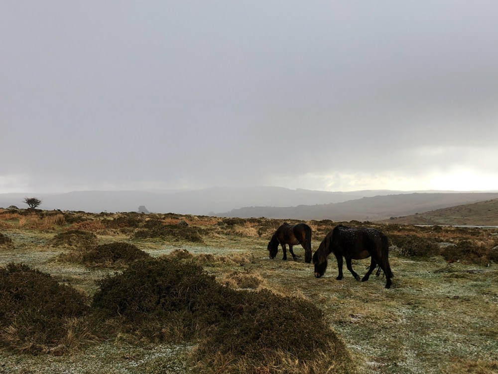Splodz Blogz | Dartmoor National Park